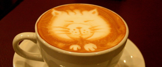 Did you know… Cats and Coffee?!