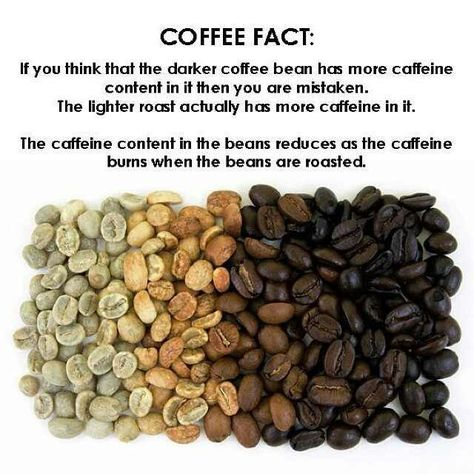 Which Beans Have More Caffeine?