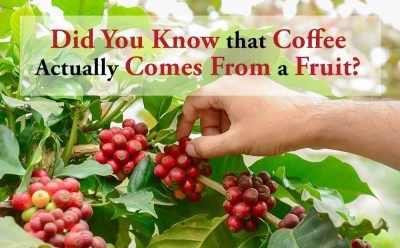 Wait… Coffee is a Fruit?